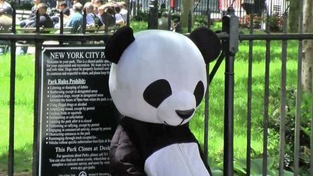 panda_besic.jpg